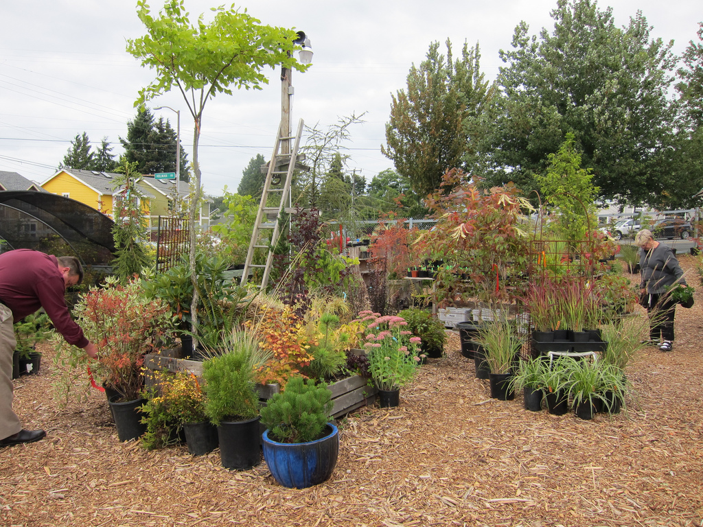 101 Things To Do In Ballard: Get your plant on | Westside Seattle