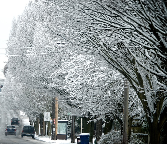 White Christmas Snow.White Christmas Expected For The First Time In Nine Years